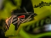 airoh_mxgp_9_it_2015-3